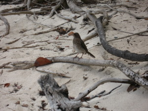 some kind of bird - we saw a few on every beach and at every outdoor eatery