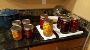 Eight quarts of preserved cherries!